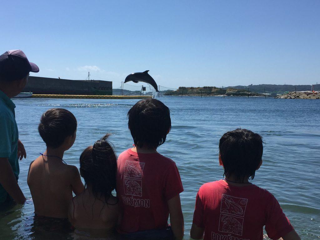 2018日間賀島ドルフィンビーチの開催