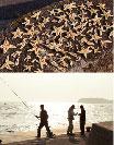 ヒトデと釣り
